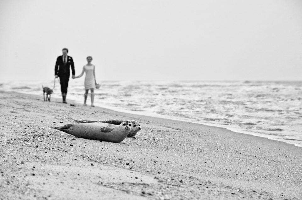 """Hochzeit mit Seehunden am """"K4"""" bei Wind und Wetter"""